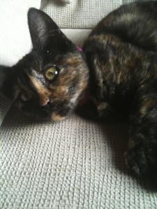 cat needing home aljezur