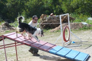 Tackling The Obstacle Course (4)