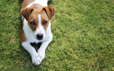 West Coast Fun Dog Day -17th April 2016